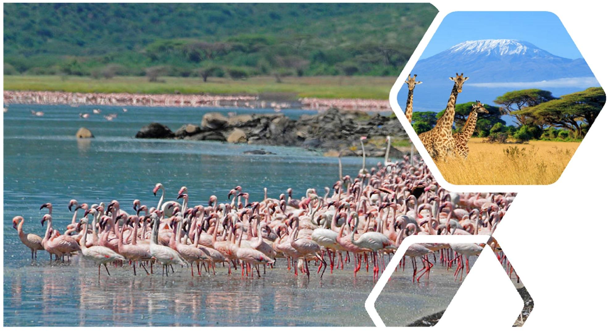 Safari Tour Of Kenya 4N / 5D